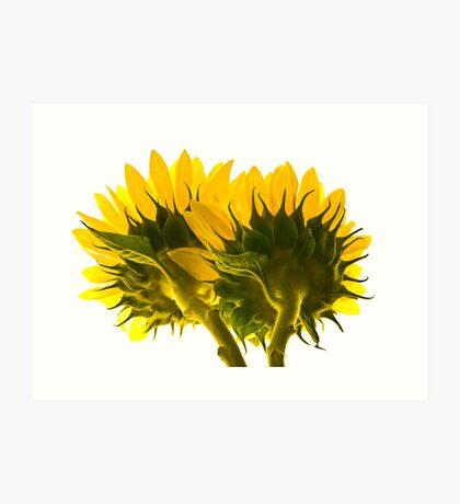 High Key Sunflowers Art Print