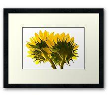 High Key Sunflowers Framed Print