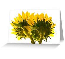 High Key Sunflowers Greeting Card