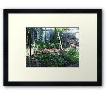 My Vegetable garden Framed Print
