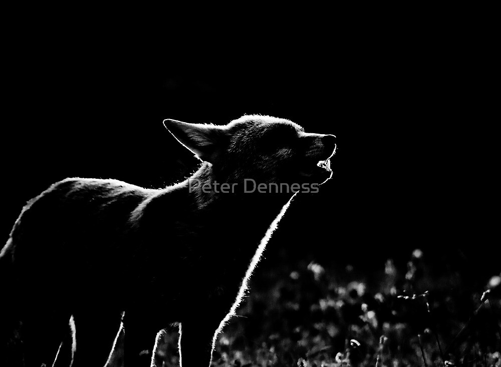The Howling by Peter Denness