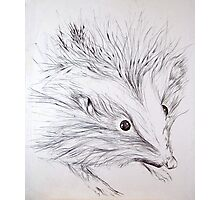 Pen and Ink Hedgehog Photographic Print