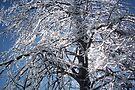 Ice In The Tree by Allen Lucas