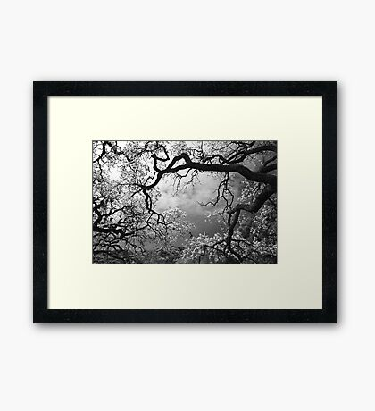 Sheltering Sky Framed Print