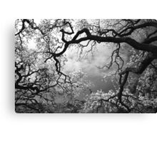 Sheltering Sky Canvas Print