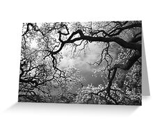 Sheltering Sky Greeting Card