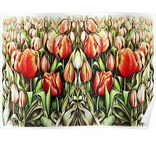 Mirrored Field of Tulips in Colour Poster