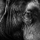 The Old Elephant by Robyn Carter