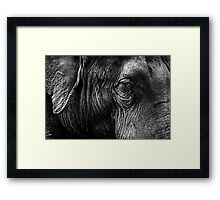 The Old Elephant Framed Print