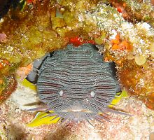 Toadfish by Rob Emery