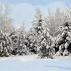 Snowy Trees by L J Fraser