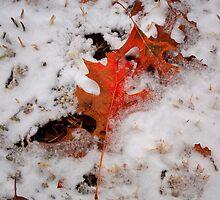 Fall by Kaushik Rabha