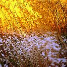 Simle Elements :  Grass and sunlight. by Lozzar Flowers & Art