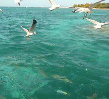 Seagull & Fish Wars by DecorDiva