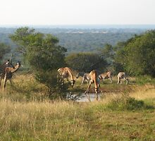 The Watering Hole - Africa by Ginelle Colombo