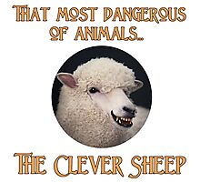 That Most Dangerous of Animals - The Clever Sheep Photographic Print