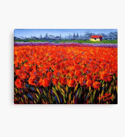 Holland Tulip Field Canvas Print