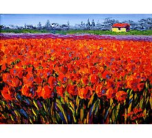 Holland Tulip Field Photographic Print