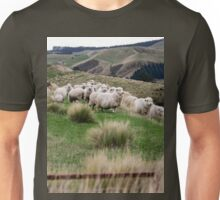 an exciting New Zealand