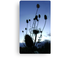 Teasels (Scottish streamside, November) Canvas Print