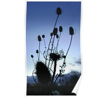 Teasels (Scottish streamside, November) Poster