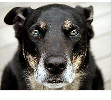Grown dog by oskarpoole