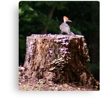 Front Yard Visitor 2 Canvas Print