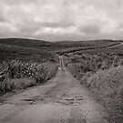 The Road to Extinction by Ellen Cotton