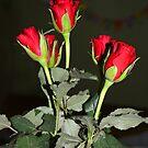 Red Roses by Sunil Bhardwaj