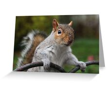 Got Any Nuts? Greeting Card
