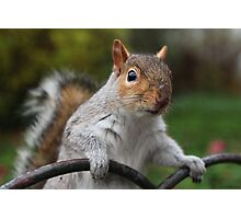 Got Any Nuts? Photographic Print
