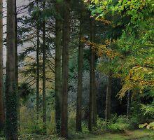 Medland Lane, Near Crediton, Devon by Squealia