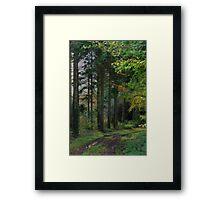 Medland Lane, Near Crediton, Devon Framed Print