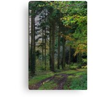 Medland Lane, Near Crediton, Devon Canvas Print