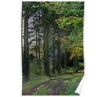 Medland Lane, Near Crediton, Devon Poster