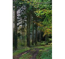 Medland Lane, Near Crediton, Devon Photographic Print