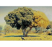 The Colors of Autumn. Photographic Print