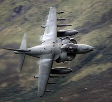 Harrier low flying in Wales by Rory Trappe