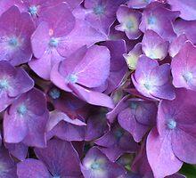 Purple Hydrangea by art2plunder