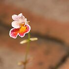 Lonely  by bero84