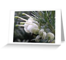 Grevillea Prince William! Greeting Card