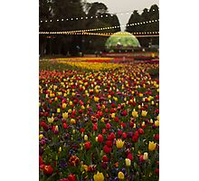 Canberra Floriade Photographic Print