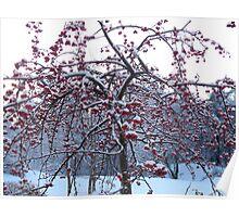 Frozen Cherry Berries Poster