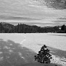 Bear Valley 4 by flyfish70