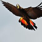 Black Cockatoo by Geoff Beck