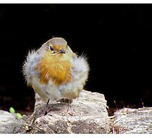 Curious Robin Photographic Print
