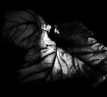 Old Leaf by Colin Shanley