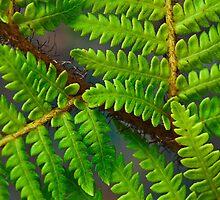 Florida Ferns by Melissa Gurdus