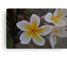 BRIGHT NATURE Metal Print