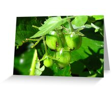 Who is eating the baby tomatoes? Greeting Card
